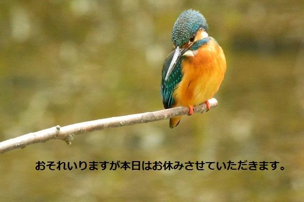 20130416off.jpg