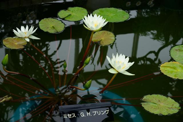 D6D_0145.jpg